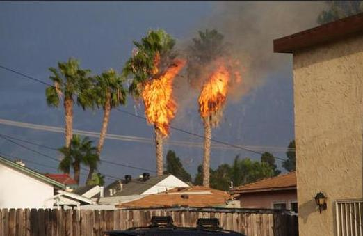 Burn Palms lightn PB 9-16-14