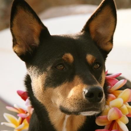 OB dog surf rec closeup