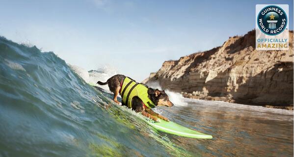 OB dog surf record