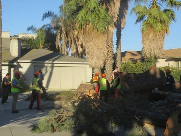 OB Torrey pines saratoga 2-9-16 down kb