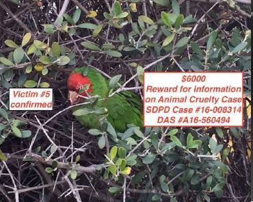 OB parrot dead ed