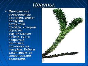 Plaunas växter