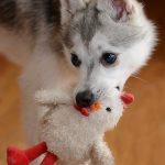 dog-1251576_640 by BrookLorin - pixabay.com