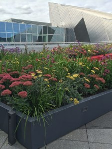 green roof top showing flowers in Dublin