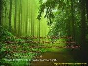S5-Cita de Tonash Hinold Uctoru