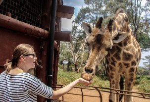 As close as it gets: meeting the giraffes