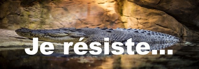 crocodile - copie 2