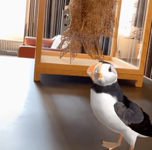 Olafur Eliasson's New App Lets You Play With Puffins and Puts Rainbows in Your Room
