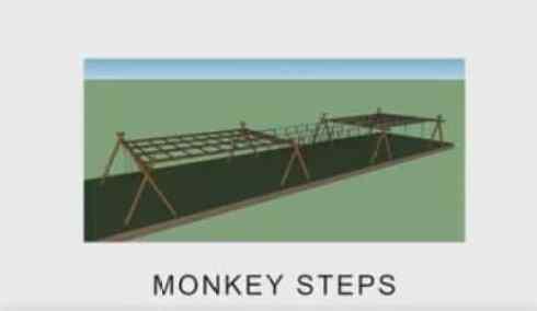 Monkeys Step