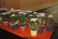 Blumengewinne