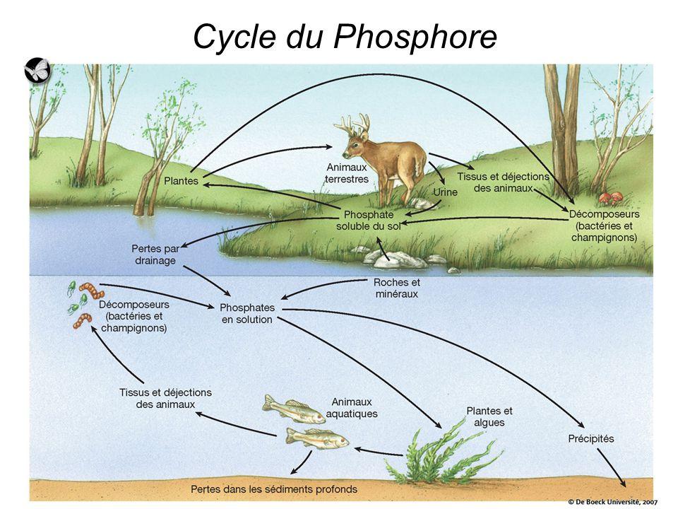cycle_phosphore_DeBoek2007