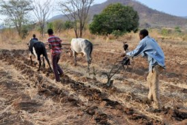 Lutte contre les effets du changement climatique : l'Ocades lance un projet à Toma