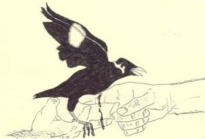 PHELAN, GARRETT_MYNAH NO1_2008