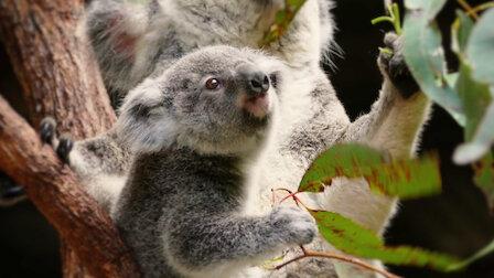 """Résultat de recherche d'images pour """"72 cutest animals"""""""