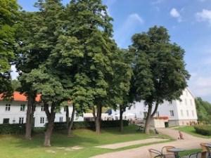 Kastanjetrærne