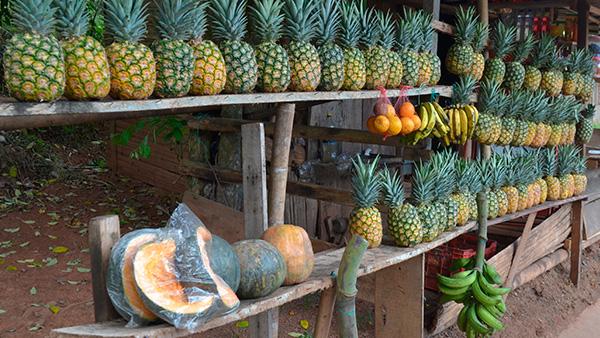 La piña es uno de los principales productos de Dagua