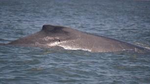 El avistamiento de ballenas