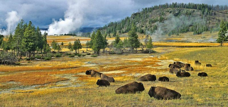 yellowstone-national-park-5BNS1455