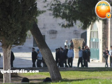 Febr 7 2013 Settlers and armed forces desecrate al-Aqsa Mosque - Photo by QudsMedia 32