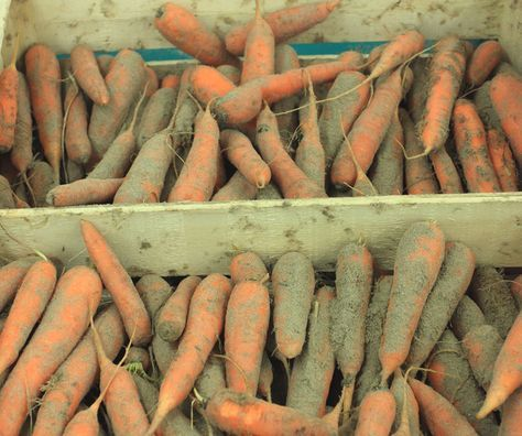 Carrots in sand(Pinterest)