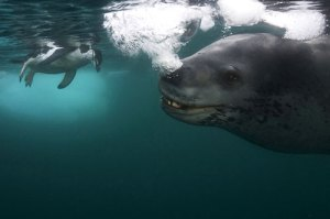 Photo: Paul Nicklen, National Geographic