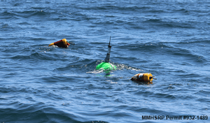 Green buoy is the telemetry buoy with the satellite and VHF tags.  The other 2 buoys are floats from the entangling line.