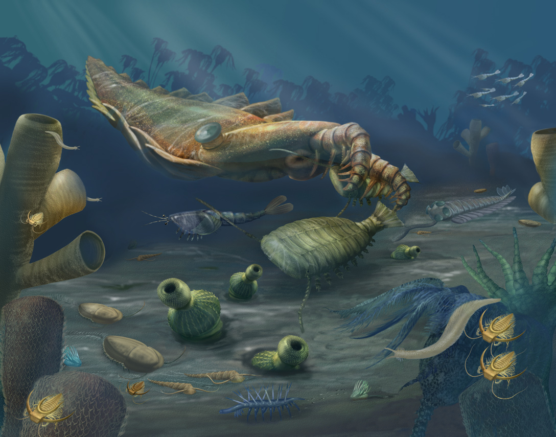 A Collection Of Cambrian Fossils