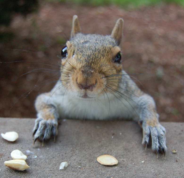begging-squirrel-1.jpg