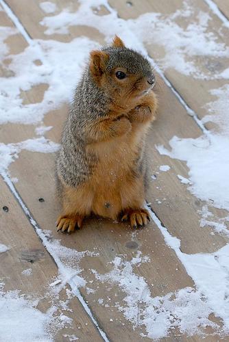 begging-squirrel.jpg