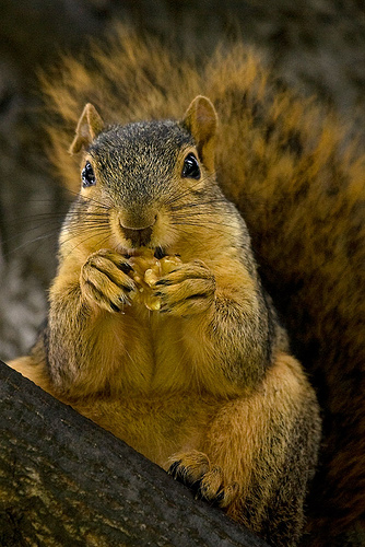 squirrel-and-nut.jpg