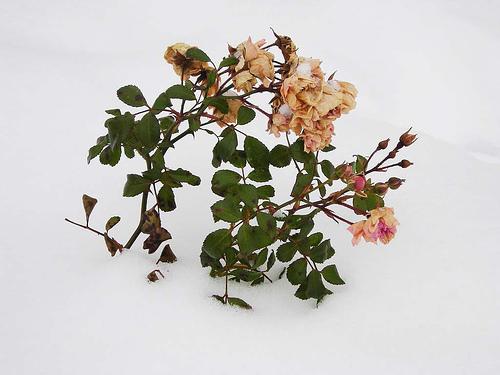 winter-flowers.jpg