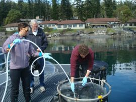 Adding CO2 saturated seawater back into the bags
