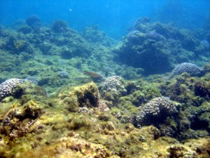 Corals and algae compete for space and resources in a reef.