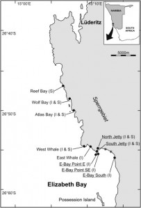 Fig 1: Shows map of Elizabeth Bay, Namibia. Dots indicate survey sites, intertidal (I) and sub-tidal (S). Asterisks mark the point of deposition from tailings. The three northernmost sites were used as reference sites.