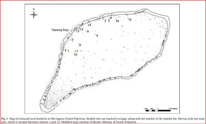 Study sites in the Ahe Lagoon, French Polynesia
