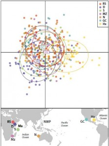 Figure 2: Scatter plot from a discriminant analysis of principal components using microsatellite DNA. Dots represent individuals from seven locations. Sampling locations are: RS – Red Sea; D – Djibouti; S – Seychelles; Mz – Mozambique; N – Ningaloo; GC – Gulf of California; Hx – Isla Holbox. Only mtDNA was available for Maldives (Ma) and Northwest Pacific (NWP).
