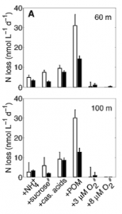 Fig 3  . Measured nitrogen loss from water samples taken from the north east Pacific after addition of food sources with varying C:N ratio. Open bars represent loss from denitrification and solid bars represent losses from anammox. Low concentrations of oxygen are shown to inhibit denitrification to a greater extent than anammox.