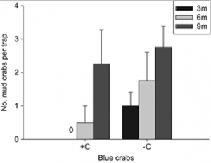 Fig 2. Mean (+ SE) number of Panopeus herbstii mud crabs colonizing replicate patches (0.16 m2 crab traps) of Gracilaria vermiculophylla with (+C) and without (−C) a predatory blue crab and placed at distances 3 m (black bars), 6 m (light grey bars) or 9 m (dark grey bars) from an oyster reef (n = 4).