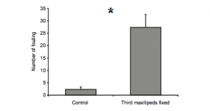 Counts of fouling on phyllosoma as a control group, compared with phyllosomoa that had their third maxillipeds glued within a tube.