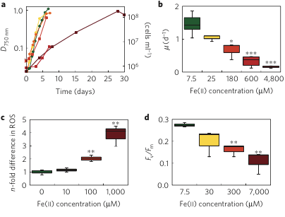 Fe(II) as poison: For increasing Fe(II) concentrations: a) Growth of cyanobacteria b) initial growth rates from 'a', c) concentrations of reactive oxygens species building up within cyanobacterial cells, and d) an indicator of photosynthetic activity.