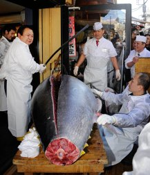Fig. 2: Bluefin tuna meat is valuable! Recently, one of these fish sold for almost $400,000 in Japan (imgkid.com).