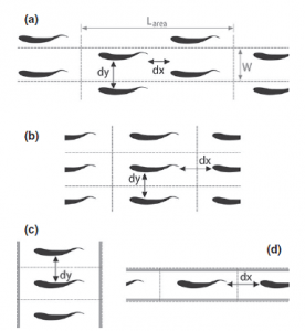 Figure 3 – School configurations tested: A) Diamond, B) Rectangle, C) Phalanx, D) Line. The distances between fish in each of these configurations (dx and dy) were varied in different simulations.