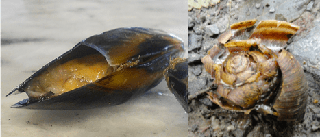 Figure 2 – Smashed mussel (left), smashed snail (right)