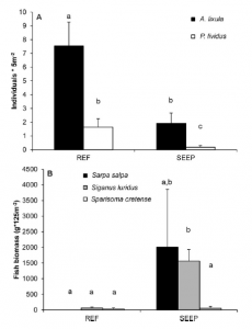 Fig. 4: Survey results of sea urchins and herbivorous fish at both reference and seep sites. There are way more urchins in the reference site, and a lot more fish at the seep site.
