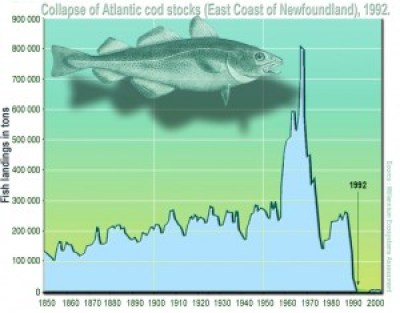 Figure 1: Collapse of the Northern Atlantic cod stock.  Credit: Lamiot, Wikipedia Commons
