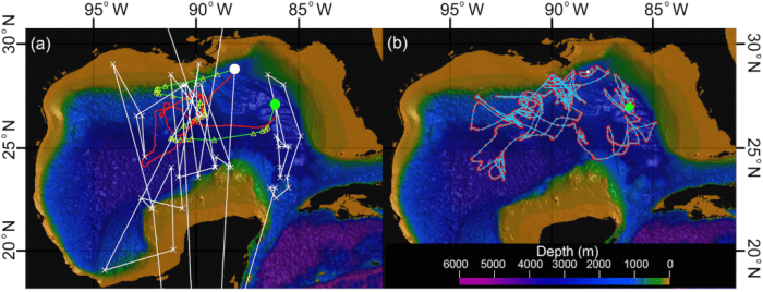 Figure 2: a) The white line is the light based track for a single fish, while the red and green lines are two versions of the sea surface temperature adjusted track. b) The blue represents the ocean heat content adjusted track for the same fish.