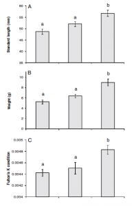 Fig. 4: Results of temperature on length (A), weight (B), and health (C). Each bar represents each treatment temperature. From left to right: +0.0C, +1.5C, and +3.0C. In all measurements, fish grown at three degrees warmer fared better.