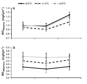 Fig. 5: This figure shows metabolic rates (A = resting, B = maximum) based on temperature treatment (represented by dotted and dashed lines). Moving left to right on the figure are different temperatures metabolic rates were tested at: 28.5C, 30C, and 31.5C.