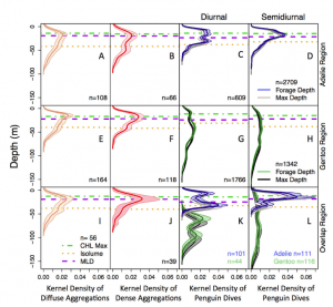 Figure 2: Depth profiles showing where krill shoals and number of foraging penguins was highest. Note box K where Gentoo penguins were noticed at higher densities at greater depths than their Adélie cousins. Interestingly, this behavior did not occur during semidiurnal tides (box L).
