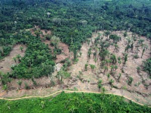 Fig. 1: Forests are important ecosystems that take in and store a lot of carbon dioxide making them crucial in fighting climate change. Unfortunately, deforestation practices are threatening this service (Getty Images).